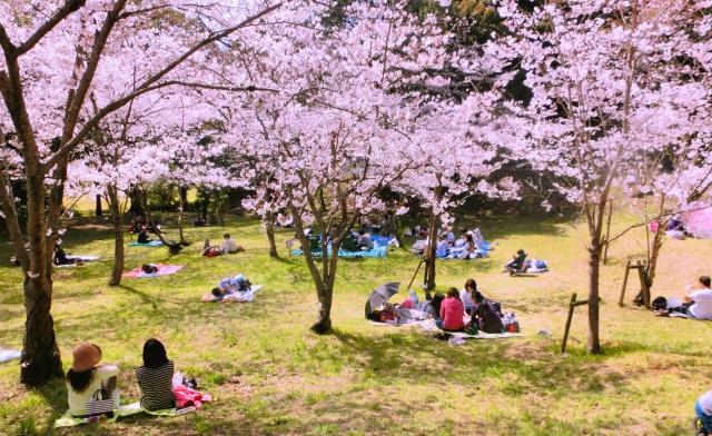 福岡おすすめ3大花見スポット